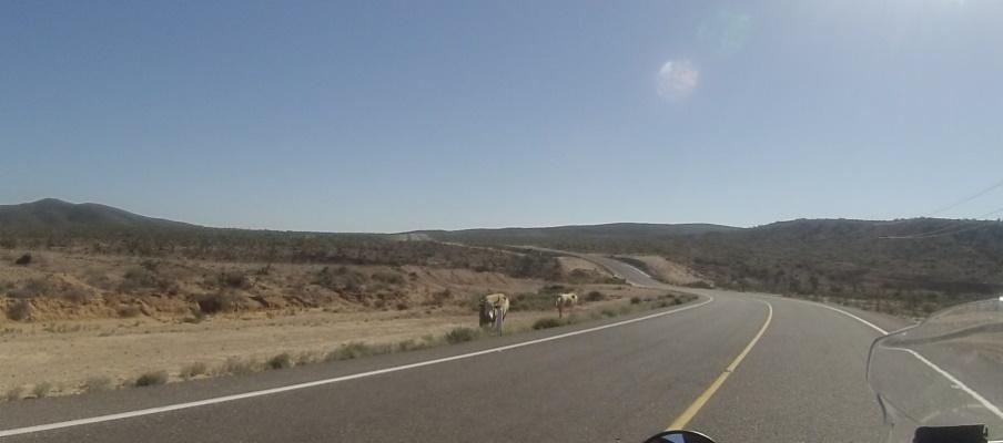 winding roads in Baja